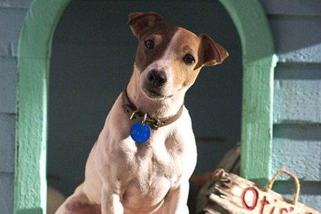 Кадры из фильма маска фильм порода собаки